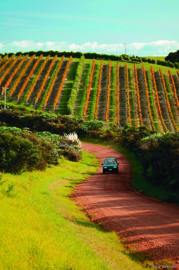 Vineyard, Waiheke Island, Auckland Region, New Zealand | Nick Servian, Tourism New Zealand
