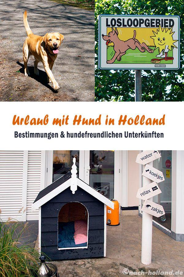 Reisen Mit Hund In 2020 Holland Mit Hund Urlaub Mit Hund Und Hund Reisen