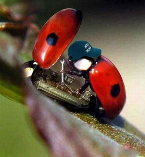 Repair bug
