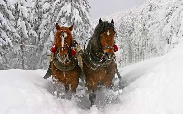 Kulig in Beskidy, Poland. Winter sleigh party. (unknown photographer)