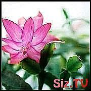 house plants for shade or low light #Houseplants house plants for shade or low l
