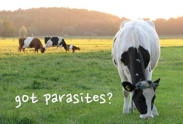 Organic Meats May Have Higher Parasite Risk - Go vegan, plain and simple.