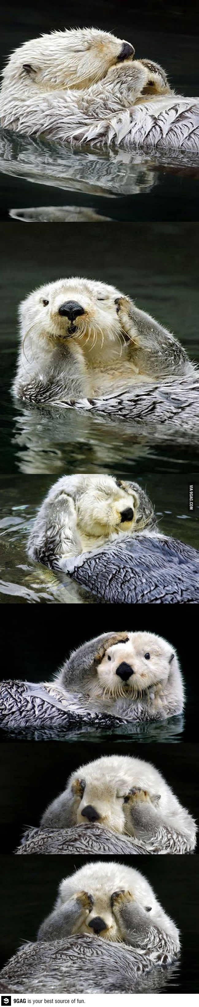 The most photogenic otter ever