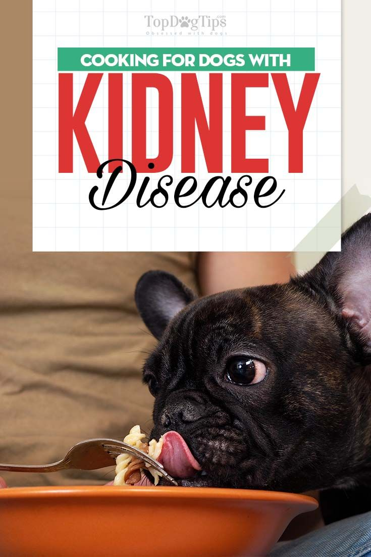 Dog Kidney Disease Diet 101: Evidence-based Guidelines on Feeding