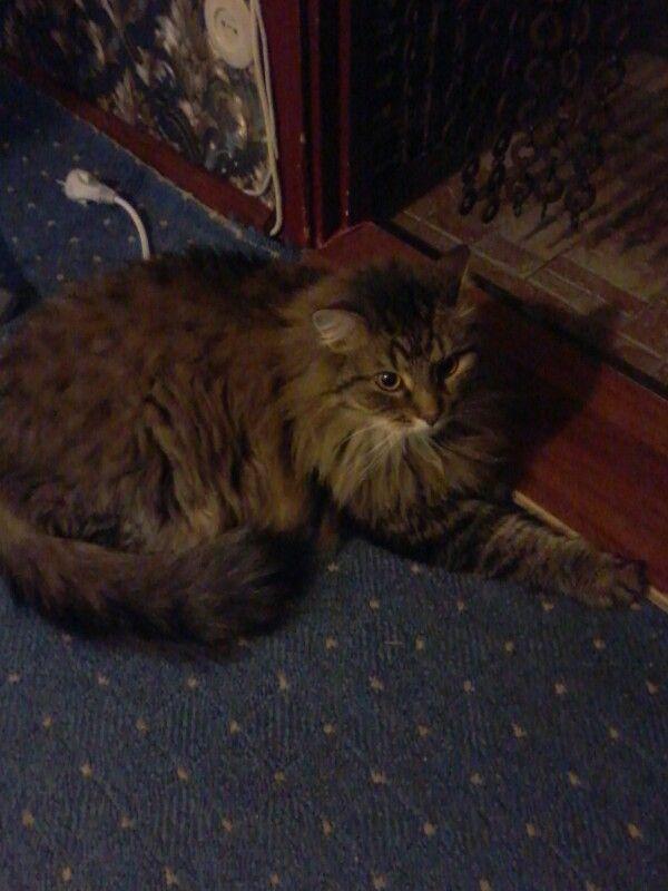 Мой  котик.