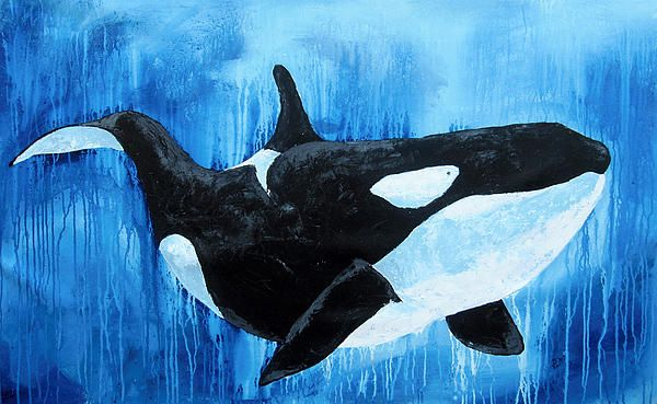 Orca Whale Painting by Ben Walker - Orca Whale Fine Art Prints and Posters for Sale