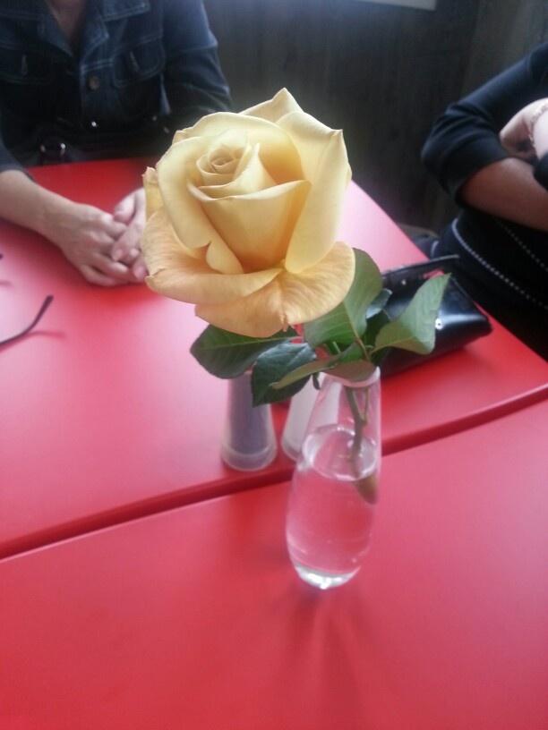 Yellow rose day 1