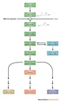 From History of HMG-CoA reductase inhibitors