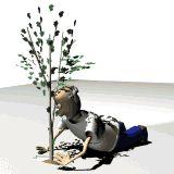Dísznövények, hobbykertészet, biotermesztés