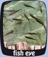 """Hier einen Text #angelnfisch <a href=""""http://www.fanggebiete.de"""">Angeln in Bayern</a> <strong>Hier fett</strong>"""