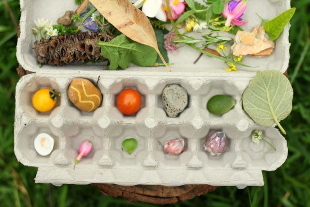 sorting nature objects in an egg carton -  the egg carton is a fantastic container in nature walking.