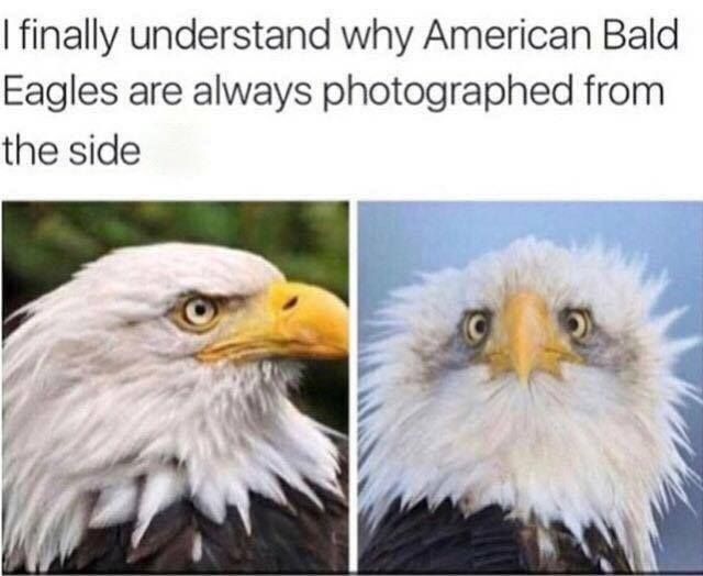 That's not right though, the second picture is legit taken as the wind behind it is blowing its feathers foward making it appear like so. If there was no wind or it wasn't as bad then it would have looked like a normal eagle. Y'alls are dumb!