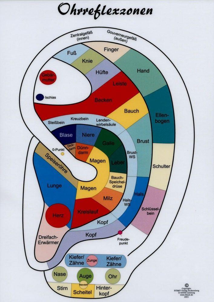 333 besten Anatomie Physiologie Bilder auf Pinterest | Massage ...