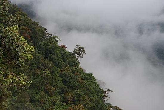 Bild från Bach Ma National Park