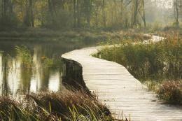 Beekbergerwoud – Apeldoorn – uitkijktoren - laatste oerbos van Nederland – natuurontwikkeling – wandelen – vlonderpad – kwel – zeldzame broedvogels