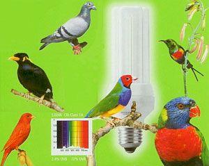 Свет для птиц  Интернет-магазин аквариумного оборудования  http://www.aquariumshop.ru/index.php?main_page=index