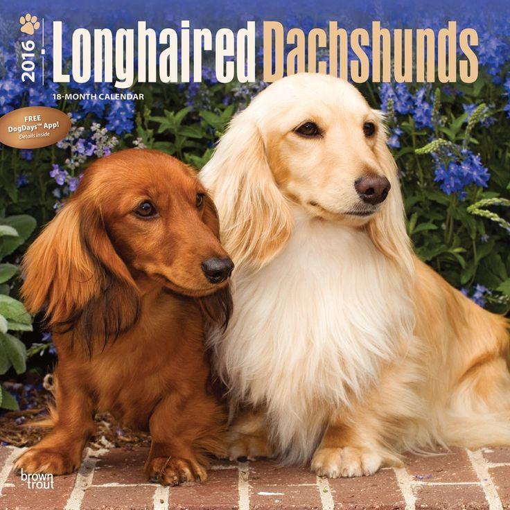 Longhaired Dachshund Calendar 2016