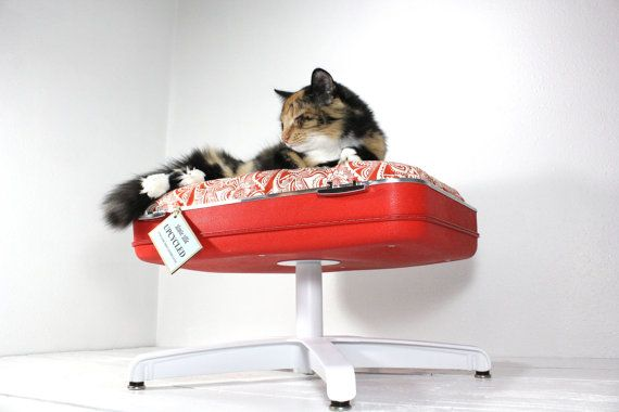 Upcycled Suitcase Pet Bed with Pedestal Base by AtomicAttic, $129.00Cat Beds, Atoms Attic, Suitcases Pets, Pets Beds, Suitcas Pets, Pet Beds, Upcycling Suitcases, Pedestal Based, Vintage Suitcas