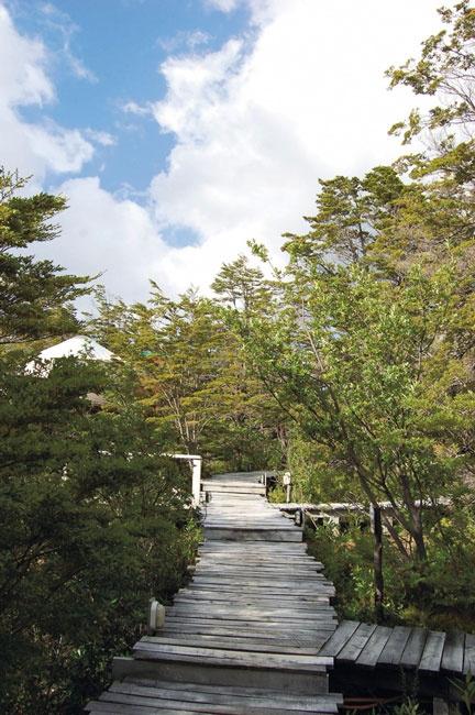 Bosque Nativo, Torres del Paine
