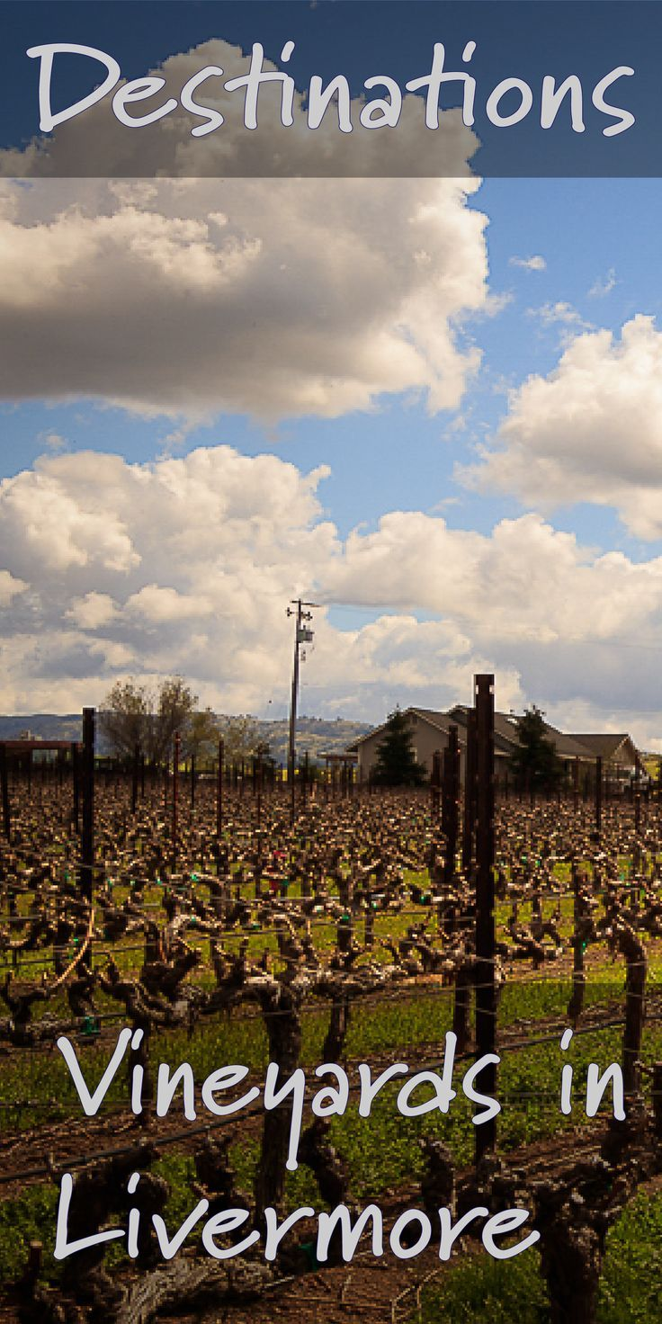 A Day With Family At The Mcgrail Vineyard In Livermore California The Intentional Travelers Wine Country California Temecula Wineries California Places To Visit