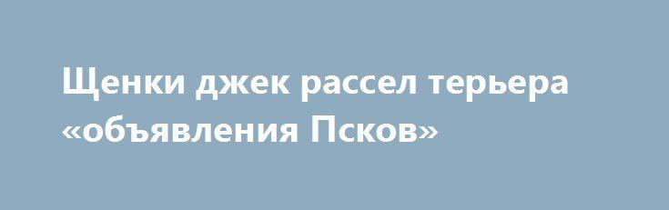Щенки джек рассел терьера «объявления Псков» http://www.pogruzimvse.ru/doska19/?adv_id=715 Питомник Морской каприз предлагает замечательных щенков породы джек рассел терьер, родились 19 июля текущего года. Родословная РКФ, ветеринарный  паспорт, клеймо, на момент продажи будут иметь все прививки по возрасту. Отлично подойдут для участия в выставках и просто в семью.    - Мать: Звездная пыль черри(юный чемпион России, чемпион России).    - Отец: Добрыня Добрынич фром рассел хаус (Юный чемпион…
