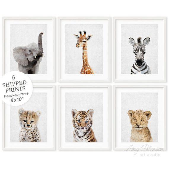 Nursery Wall Art Assorted Animal Photos Kids Room Posters Meerkat Print Baby
