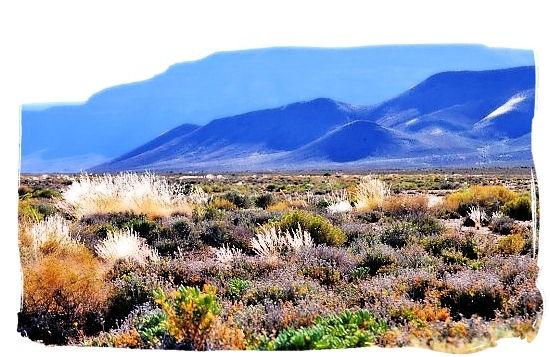 Tankwa Karoo National Park,...  Colourful autumn morning in the Tankwa Karoo