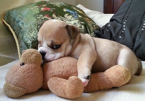 21 Adorable Pups Snuggling With Their Stuffed Toys - 3MillionDogs