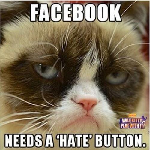 "Grumpy Cat says Facebook needs a ""hate"" button | Grumpy ... Loathe Cat"