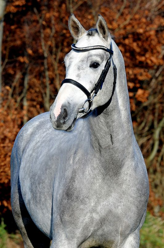 An overview of breeding objectives for warmblood sport horses
