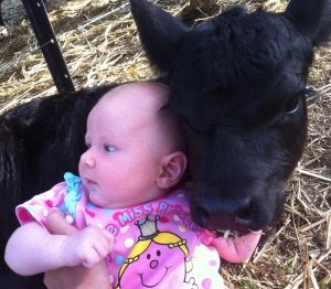 Gallery - Australian Lowline Cattle Association - membership lowline cattle news events shows stud semen health breeding nutrition diseases