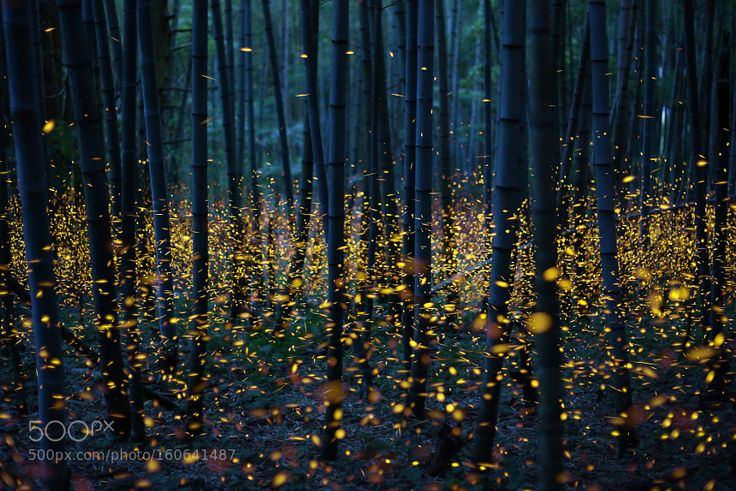 Enchanted Bamboo Forest by kei_nomiyama. @go4fotos