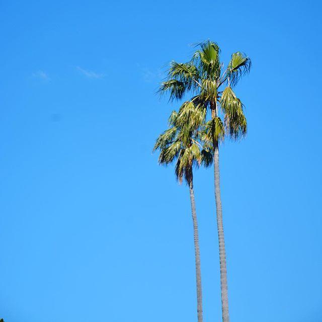 🌴 Darwin blue skies, I could get used to this weather 💙  #darwin#australia#palmtree#travelgirls#wearetravelgirls#wanderingwolfchild#outdoorwomen#femmetravel#free#love#freedom
