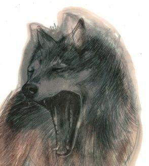 Illustrasjon 'Ulv' Miss Talseth Illustration