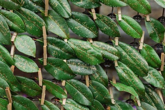 Bouquet de 25 feuilles de Magnolia frais pour être utilisé comme marque-places / cartes d'escorte / véritable couronne de feuille / guirlande florale des arrangements et bouquets de fleurs