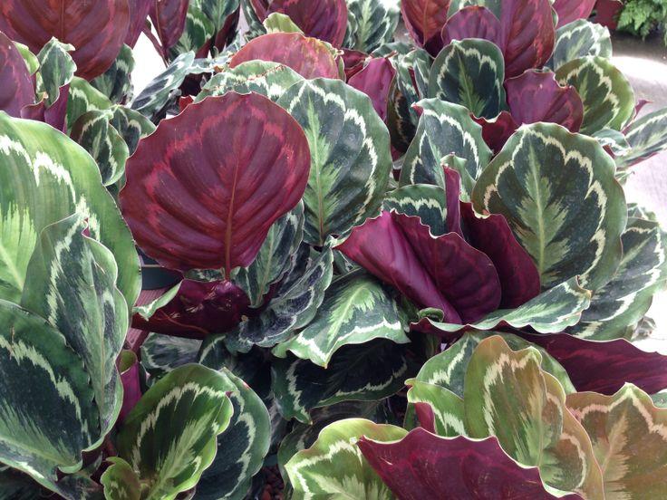17 Best Images About Pin Able Plants On Pinterest Vanda