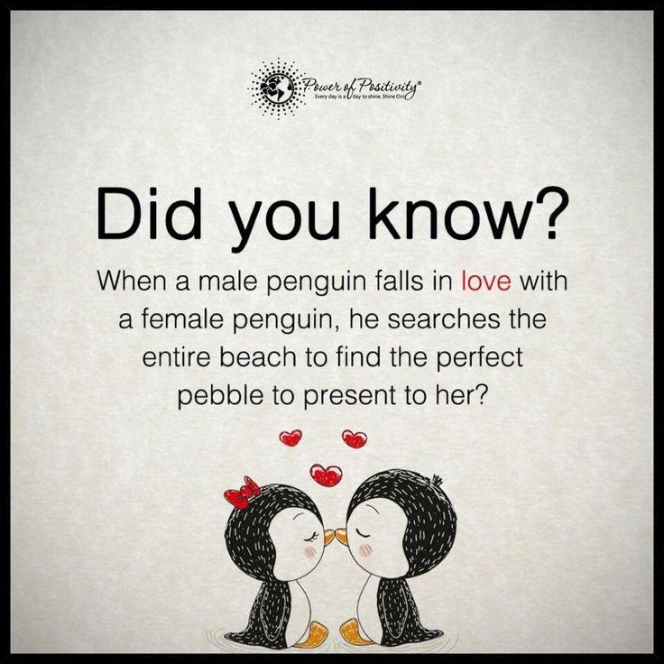 Sweet penguin love