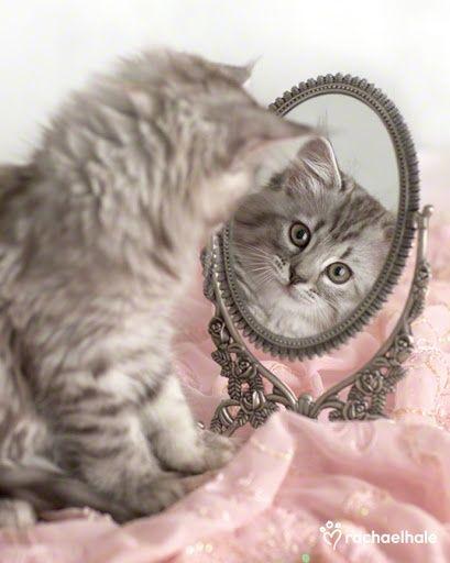 kitten in the mirror | Beautiful reflections ❤ | Pinterest)