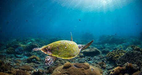 Présidentielle 2017 - Appel pour la préservation des récifs coralliens