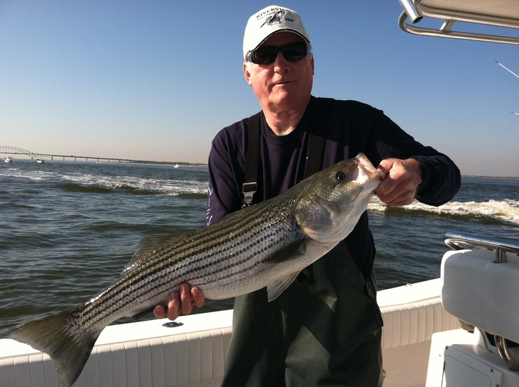 Best 25 bass fishing pictures ideas on pinterest bass for Long island fishing charters