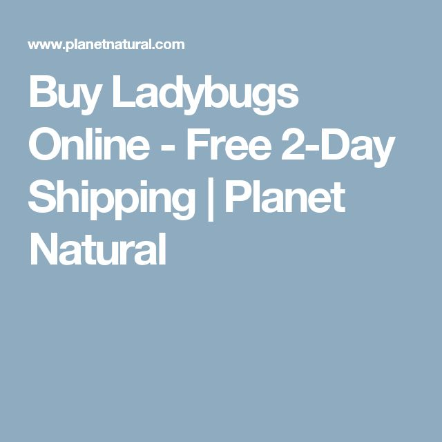 Buy Ladybugs Online - Free 2-Day Shipping | Planet Natural