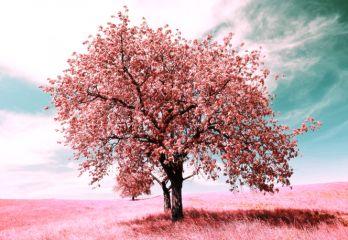GEzellig bomen schilderij vol met roze bloesem 85x113