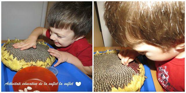 Activitati cu fructe de toamna (2,1 ani)