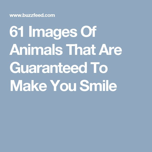 61 Images Of Animals That Are Guaranteed To Make You Smile