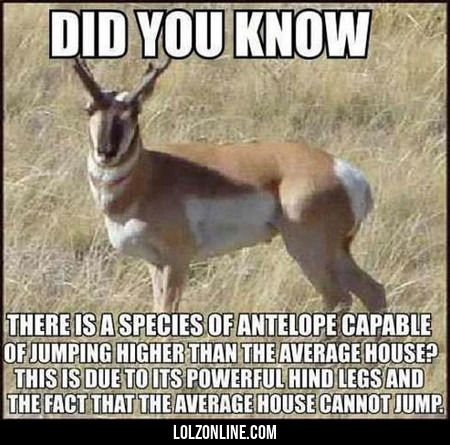 Did You Know There Is A Species Of Antilope... #lol #haha #funny
