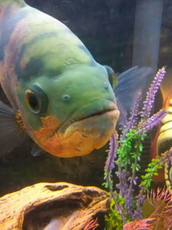 27 best images about fish and the sea on pinterest for Fish daddy s menu