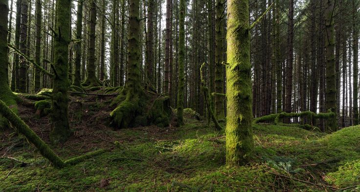 Forest Light by Eirik Sørstrømmen on 500px
