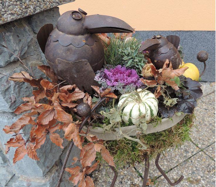 decorative cabbage as autumn outdoor decoration