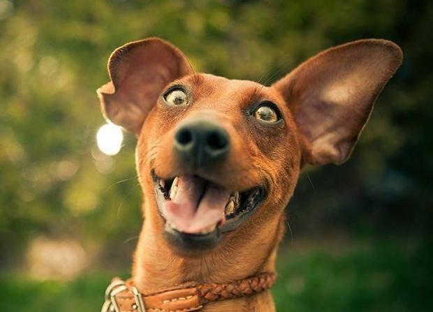 Смешные фото животных, которые вызовут у вас уйму положительных эмоций…