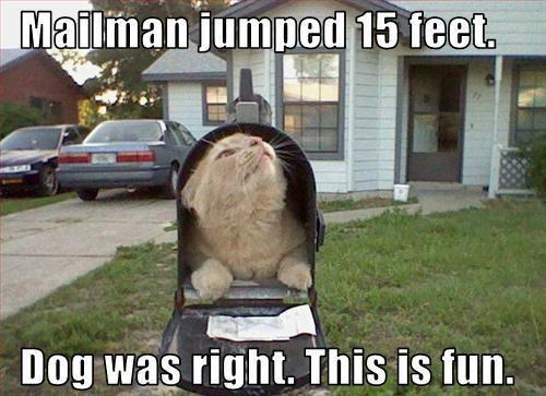 Mail man jumped 15 foot